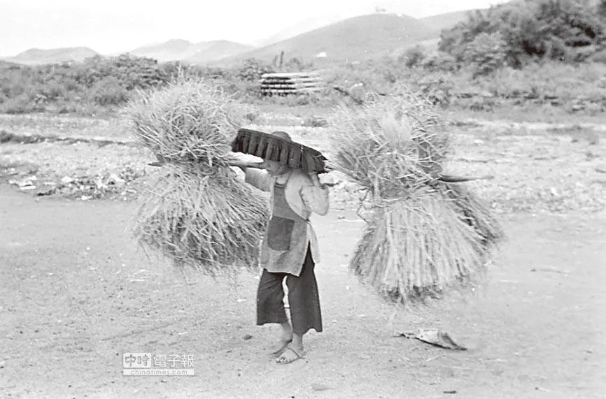 1950年,香港過境邊民擔著禾草。(取自網路)