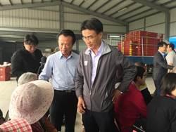 影》鳳梨無限量每斤4.8元收購 農委會:價格會回升