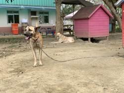 愛牠就要養牠 南市動物之家籲飼主要有責任感