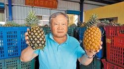 影》農糧署補貼加工 鳳梨守住每公斤8元