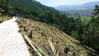 強勢剷除占用國土檳榔園 農民盼緩衝30年造林