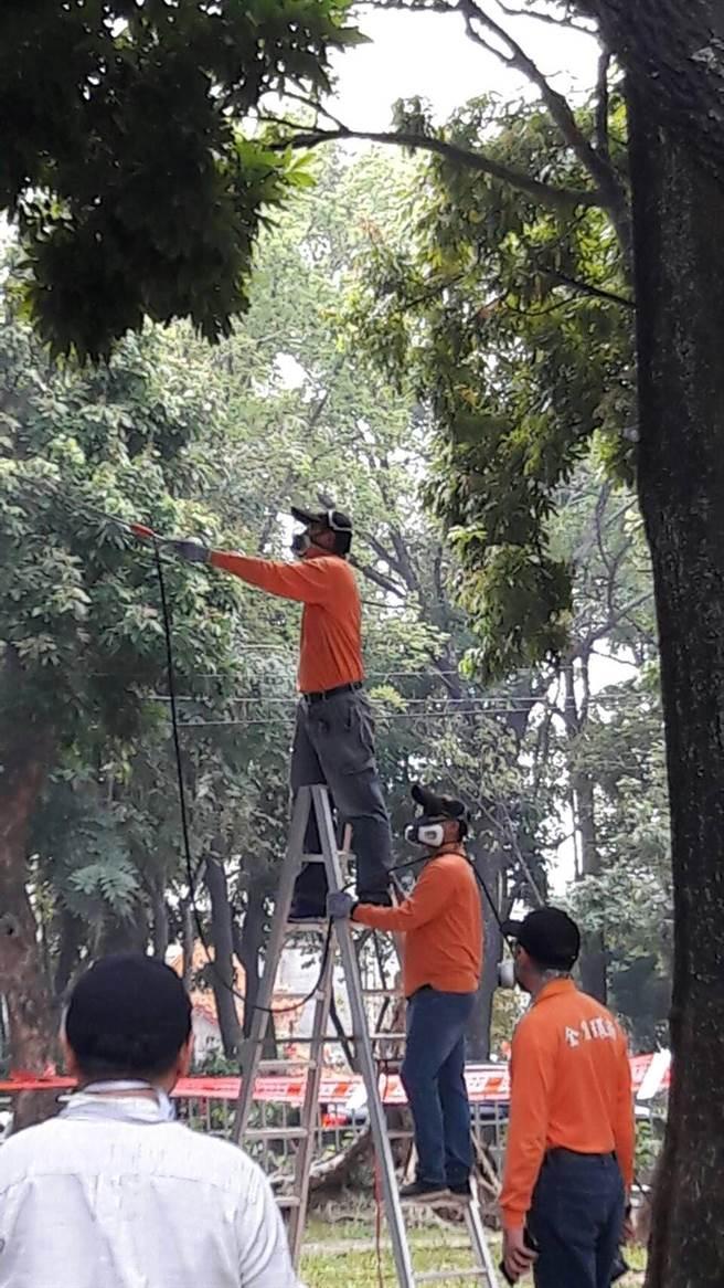 嘉義市政府噴藥防治公園裡的樹木遭荔枝樁象蟲害。(廖素慧翻攝)