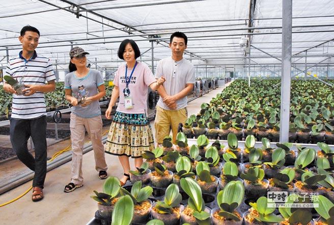 大陸招聘台籍科技特派員」。圖為一科技特派員(右2)在青島現代農業科技示範園查看蝴蝶蘭長勢。(新華社資料照片)