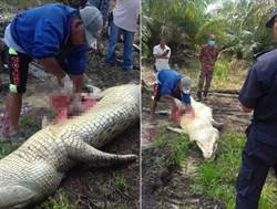 驚悚!村民釣到4公尺巨鱷 剖腹驚見一具人骨