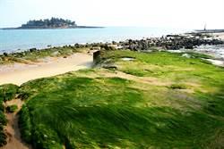 小金門「綠石槽」美景   早春新綠讓人流連