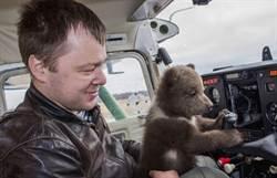 飛行員收編流浪小棕熊 變身超萌「網紅飛行熊」