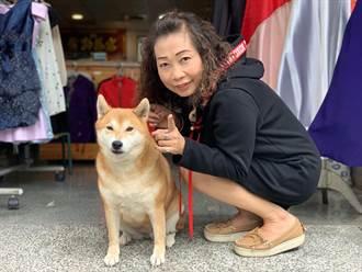 柴犬帶財  成服飾店吉祥物