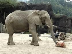 i-Voting看民意!北市動物園6月間連續10天不開放