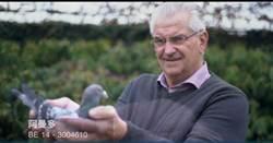一隻一棟豪宅!全球最貴賽鴿拍出4370萬天價