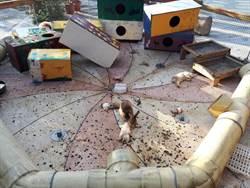大狗闖入!台東米國學校動物園死傷慘烈