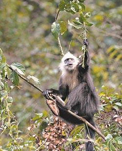 壯鄉珍稀特有種 保育堪比大貓熊