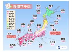 東京櫻花開了 3月底最適賞花