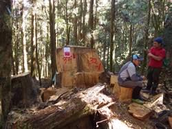 盜伐8年新低 林務局公布山老鼠犯案熱點