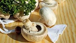 降低大腦退化風險 一週吃兩次菇菇吧