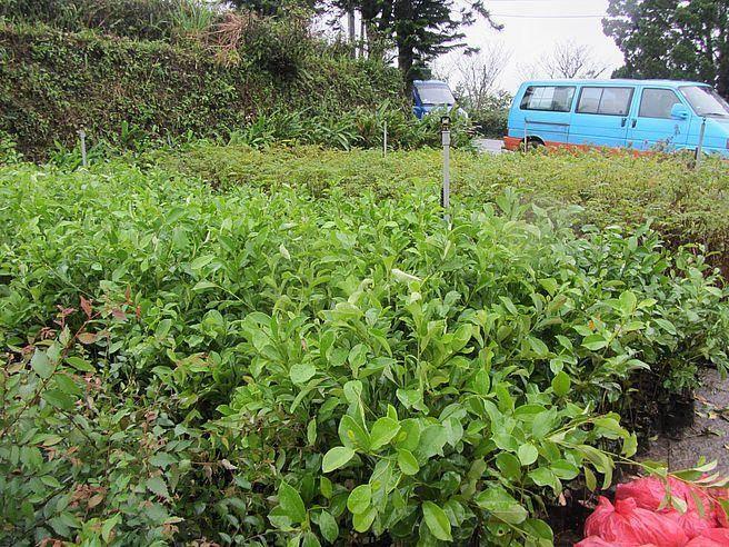 新北市政府提供無償苗木鼓勵民眾植樹。(新北市農業局提供)
