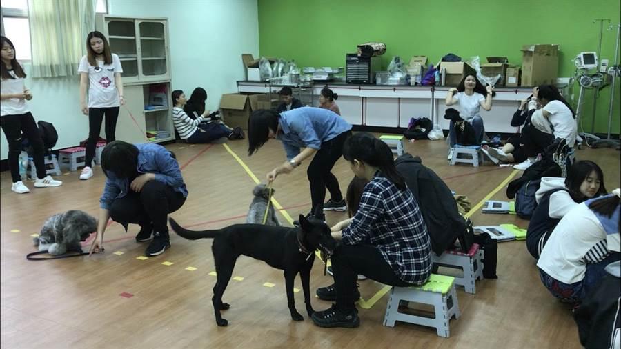美和科大老師樂戴菁經常帶Shadow到教室擔任助教,告訴學生很多關於寵物訓練的事。(高市動保處提供)