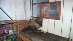 荒廢8年陰氣逼人 警察宿舍淪為「鬼屋」