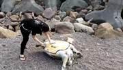 大基隆海域淪「海龜墳場」 3個月死23隻