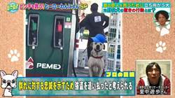 加油站老闆收養流浪犬 2年後牠報恩擊退搶匪