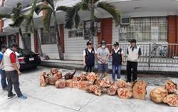 夜捕、爬樹 警查獲市值2000萬台灣扁柏樹瘤