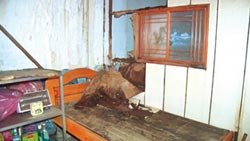 基隆警察宿舍 荒廢8年像鬼屋