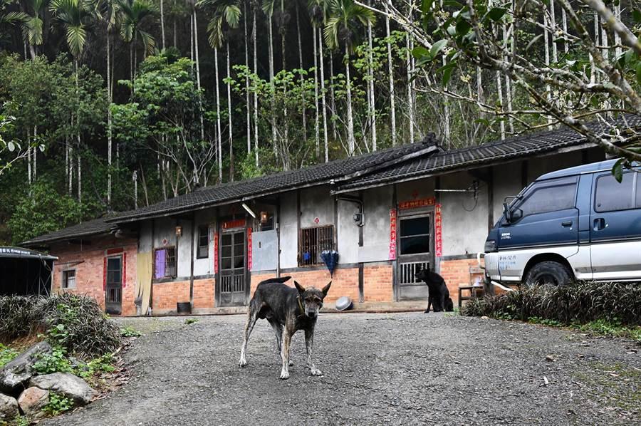 邱家老宅,是蓮華池、火焙坑山區最裡面的一戶。(沈揮勝攝)