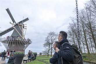 小智率團荷蘭取經 鬱金香花海旁騎單車