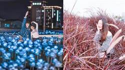 媲美韓劇場景!台中白玫瑰紫花海浪漫破表