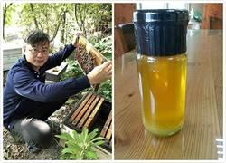 「蜂蜜檸檬」成新寵!入春喝清爽也解膩