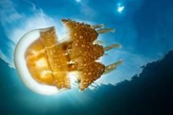 海底奇觀之首! 這生物僅上帝水族箱才有