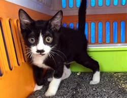母貓生幼貓棄養 歡迎愛貓人到屏東公園認養