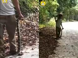 男徒手抓一公尺眼鏡王蛇 得意炫耀遭反咬喪命