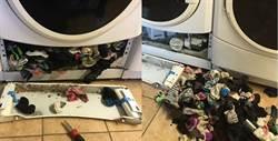 洗衣機真的會吃襪!她拆開驚見「襪子海」嚇傻