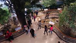 台江國家公園遊客中心開幕 看放大8倍的濕地物種模型