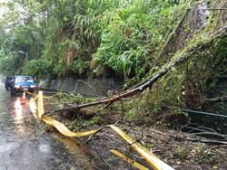 東豐自行車綠廊天災造成樹木倒塌  中市府:已施工加強安全