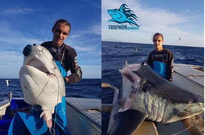 捕到巨鯊只剩頭嚇壞 剖開驚見旗魚尖喙插體內(圖翻攝自臉書/Trapman Bermagui)