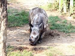 北市白犀牛搬家高雄 保育員準備「愛心便當」助適應