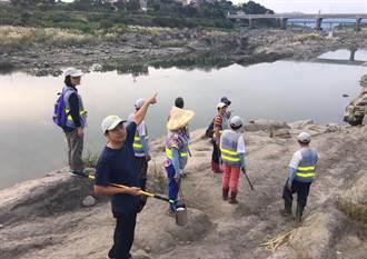 要邁向水清魚現 桃市環保局招募8隊生力軍