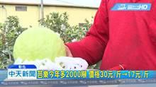 芭樂今年多出2000噸 產量過剩價格崩盼搭韓流賣出去