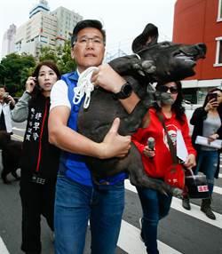 陳明義牽豬帶狗到陸委會抗議 要求陳明通道歉下台
