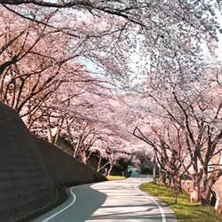 遠航直飛桃園新潟四月起每週三班  賞櫻回程還送越光米