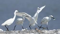春天鳥類繁殖季 花蓮溪口賞鳥體驗將開跑