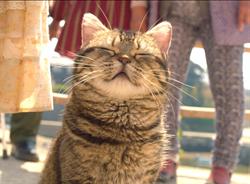 《爺爺與喵》貓咪演技不輸人