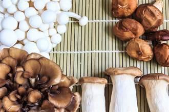 手腳冰冷中風,癌症恐上門 教授推吃這菇促血循環