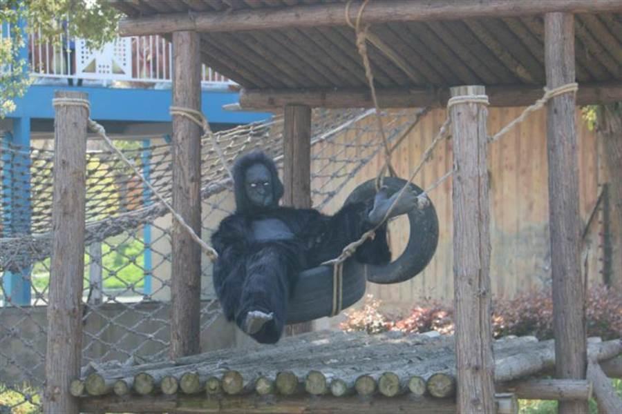 猩猩請假了?動物園派「工讀生」上陣 遊客超怒(圖/翻攝自化龍巷)