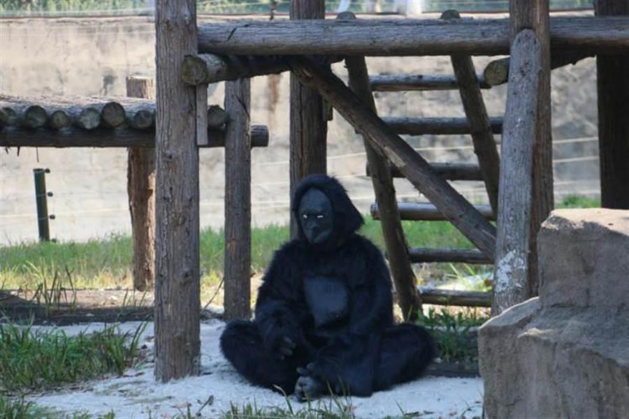 其實這是該動物園所推出的愚人節活動(圖/翻攝自化龍巷)