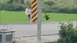可惡!阿伯賤腳狠踹 小黑狗空中轉2圈
