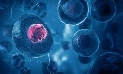 中研院研發「果凍細胞」助病毒檢測、免疫治療 獲多國專利