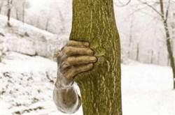 世界最孤獨的手 為何抓樹50年