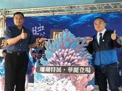 高雄旗津貝殼館珊瑚特展 正式開展